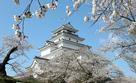 桜の間から会津若松城天守を仰ぐ…