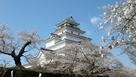 桜と会津若松城…