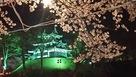 三階櫓と夜桜