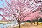 蜂須賀桜をくぐり抜けて・・・…