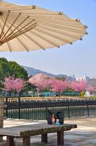 蜂須賀桜で、休憩を…