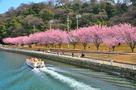 遊覧船と蜂須賀桜…