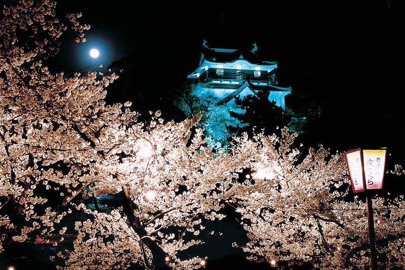 岡崎城と夜桜[岡崎城]