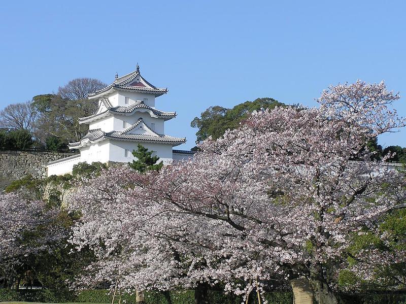 桜と坤櫓[明石城]