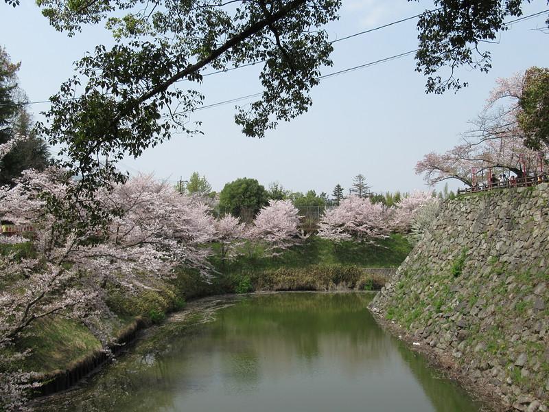 石垣と内堀と桜