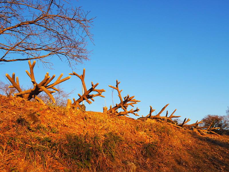 善福寺曲輪の逆茂木