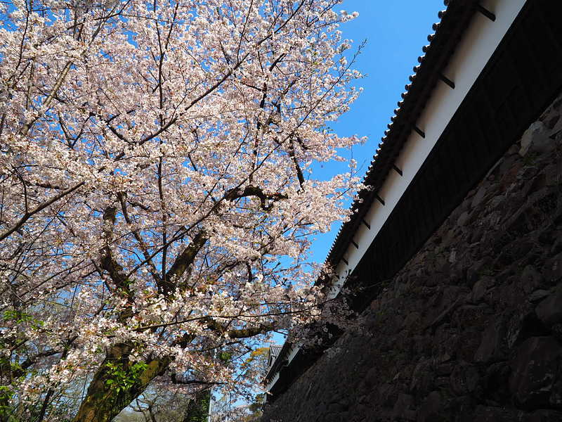 桜と多聞櫓