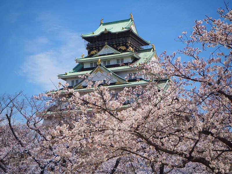 天守と桜2019春