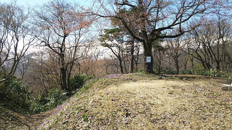 本丸跡~米蔵跡の堀切とカタクリと