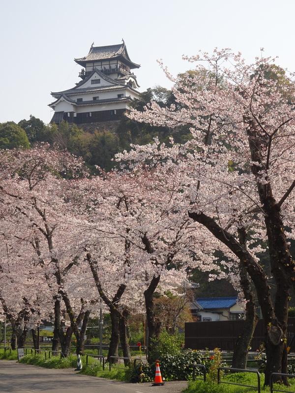 天守と桜並木