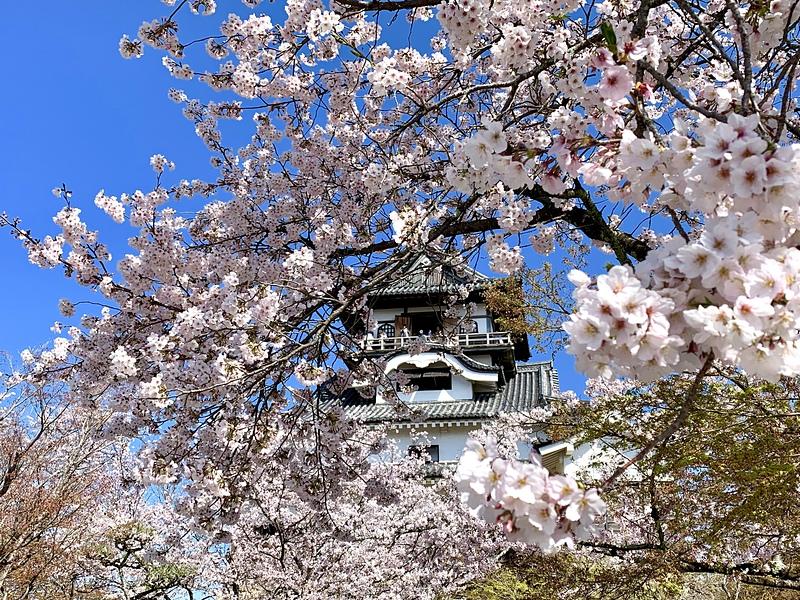 桜の隙間から