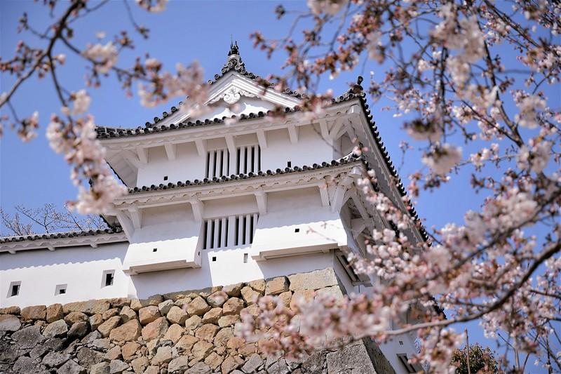 カの櫓に桜