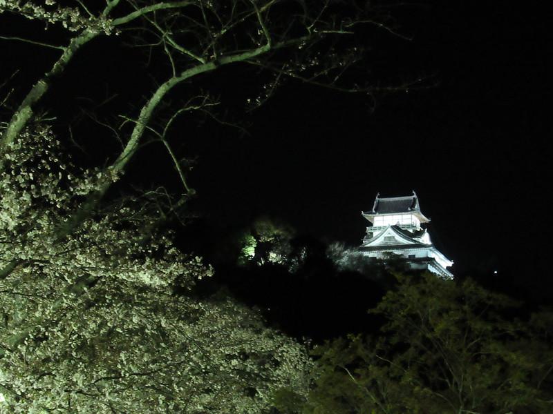 ライトアップ桜と天守
