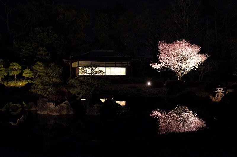香雲亭と夜桜