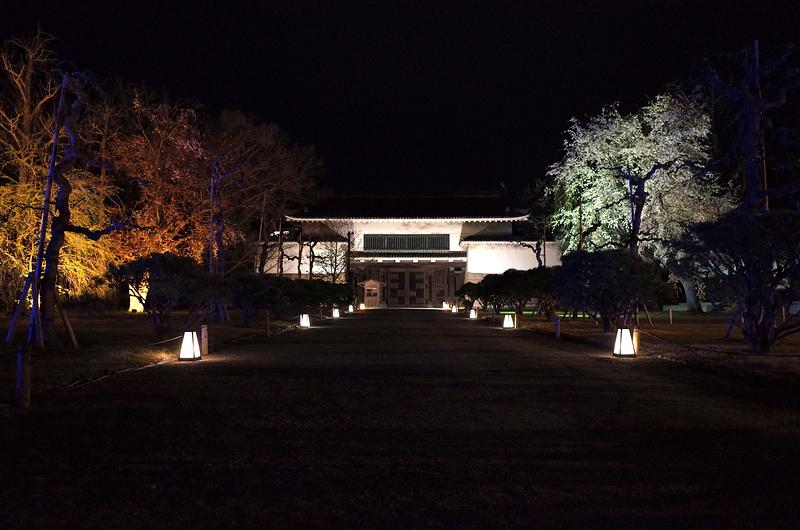 夜の北大手門(桜まつりライトアップ)