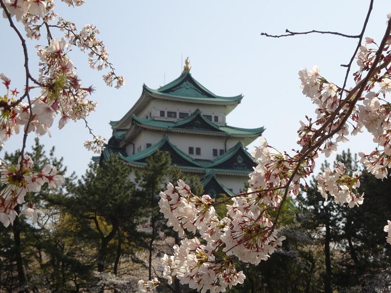 桜と天守其の参