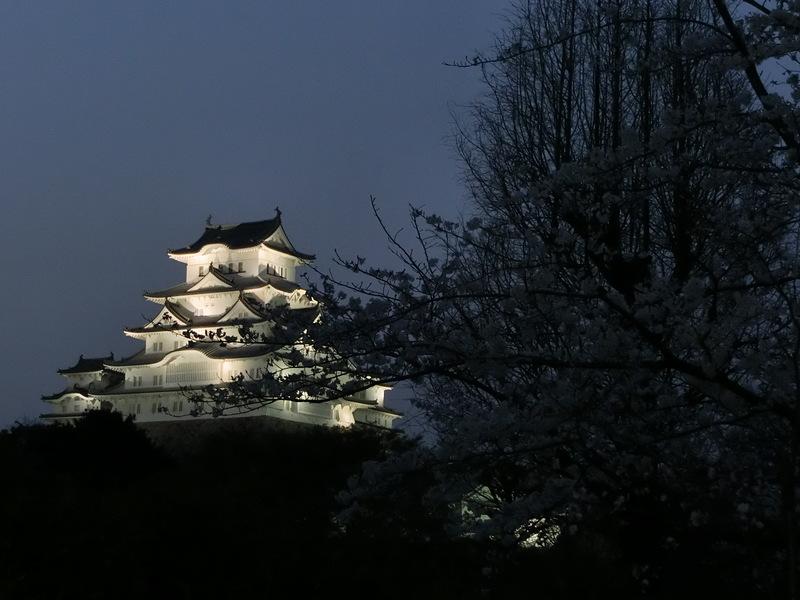 城に手を伸ばす夜桜