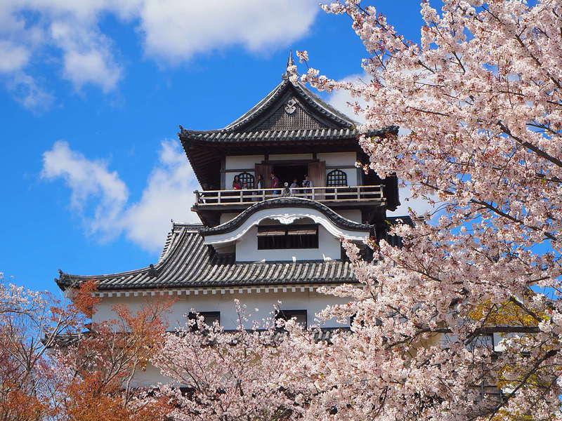 天守と桜[犬山城]