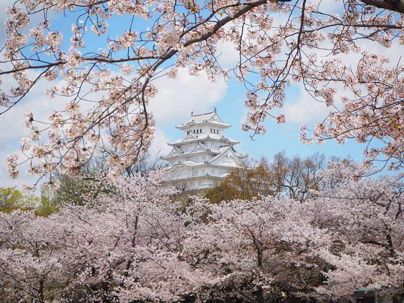 桜と白鷺[姫路城]