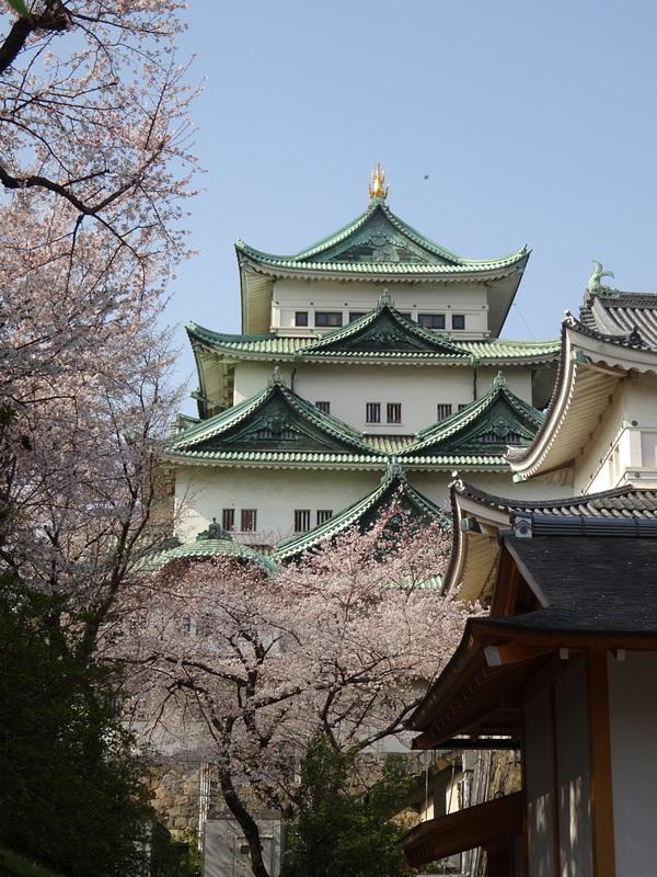 湯殿書院から眺める桜と天守