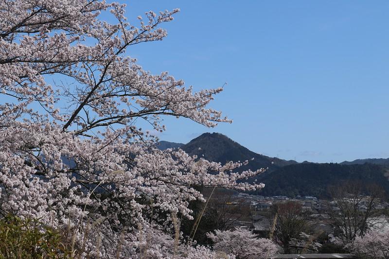 篠山城よりの遠景。
