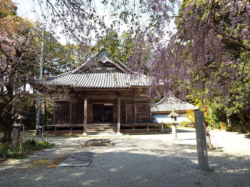 桜の近長谷寺