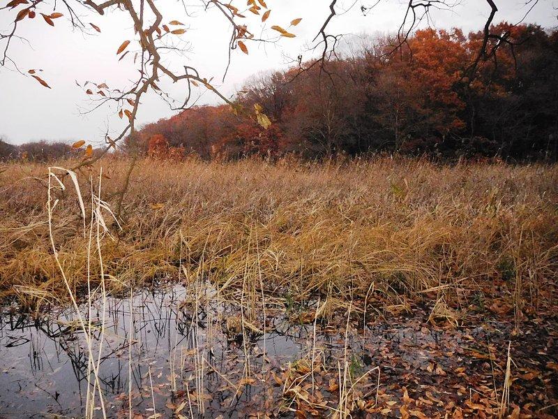 石戸城の写真:一夜堤の沼地   攻城団