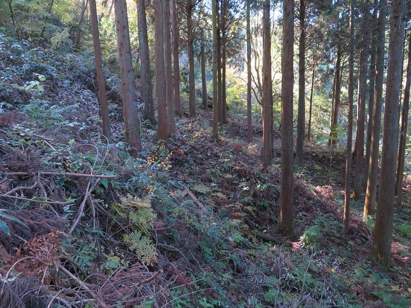 登城道から見える段状郭