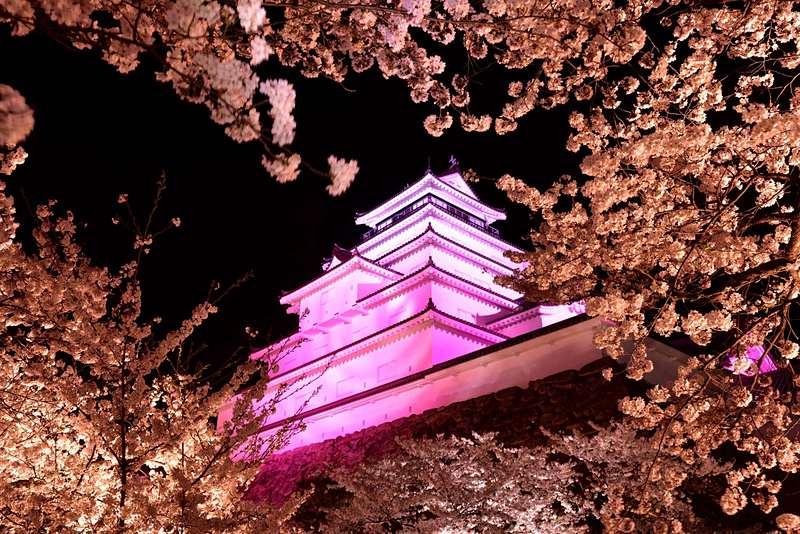 桜のライトアップ[会津若松城]