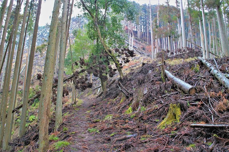 登城路にはあちこち倒木・伐採が・・