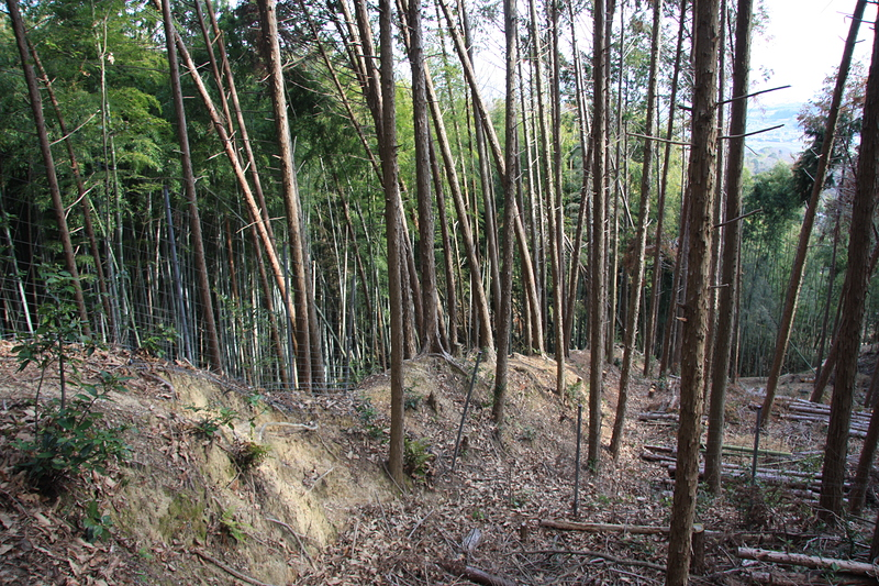 竪土塁[芥川山城]