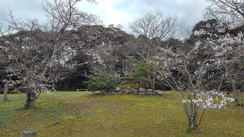 本丸桜の頃
