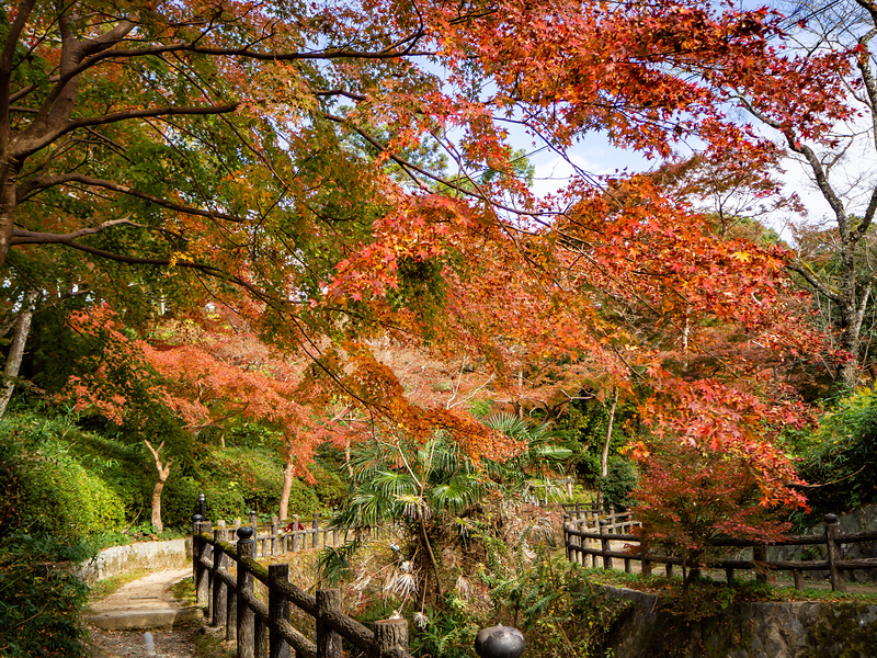 もみじ谷公園の紅葉