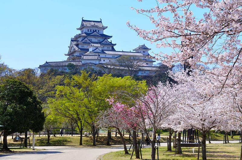 改修前の姫路城天守をシロトピア記念公園から