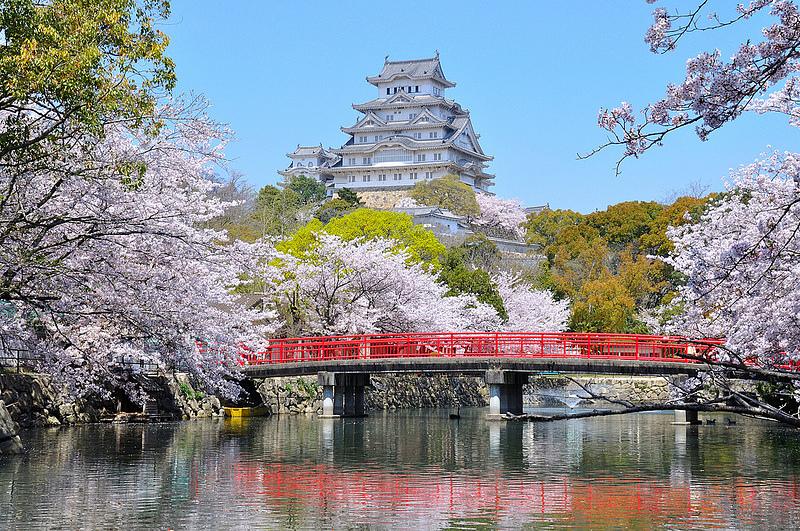城見橋からの桜と大天守(改修前)