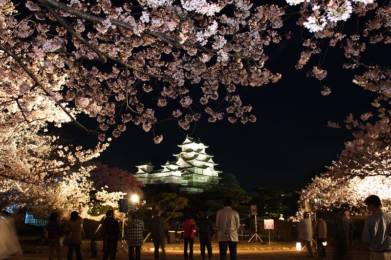 夜桜とライトアップされた天守(改修前)