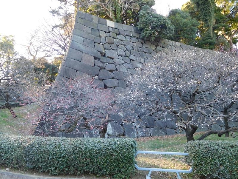 梅林坂の梅と石垣
