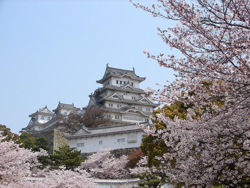 桜と大天守(改修前)