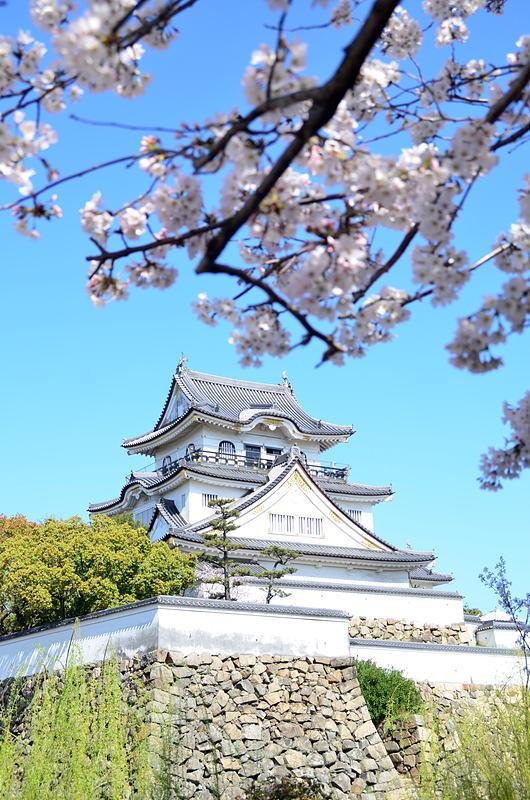 桜越しの岸和田城(2014年)