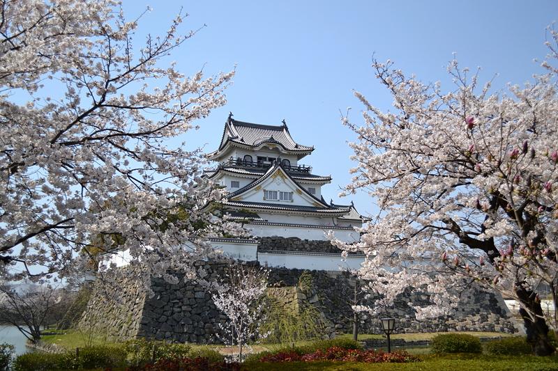 桜と岸和田城(2014年)[岸和田城]