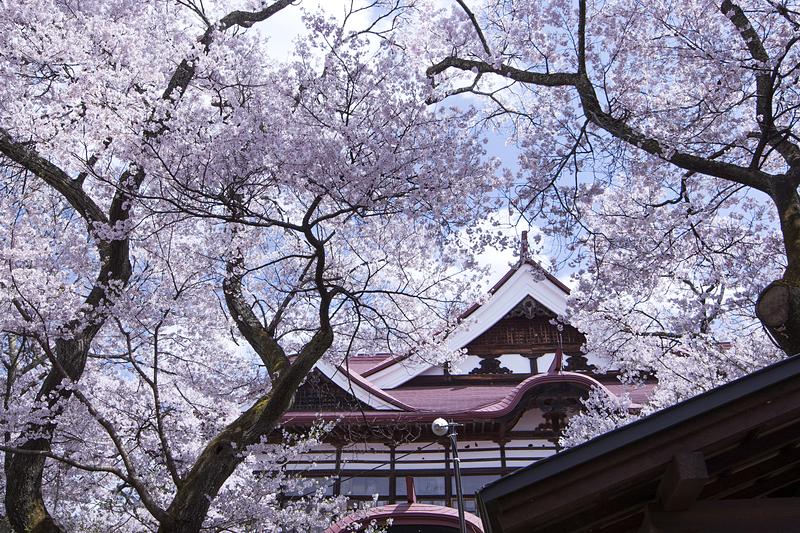 桜と高遠閣