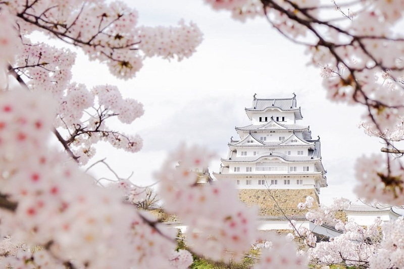 春に座す白鷺[姫路城]