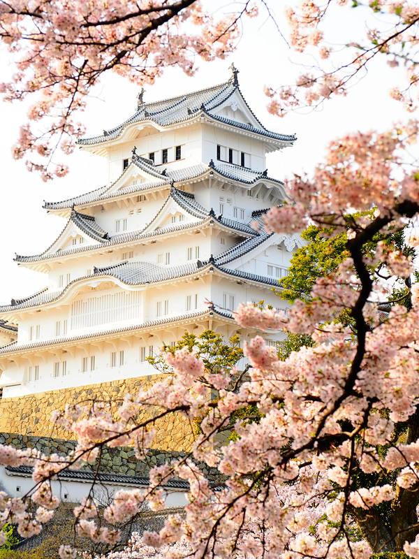 桜の間から天守閣を覗けば