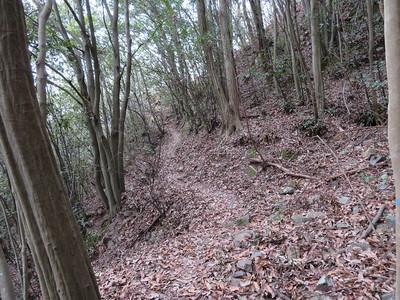 四十曲登山道(ぐるみの壇付近)