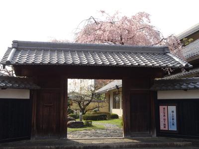 郷土館の枝垂れ桜
