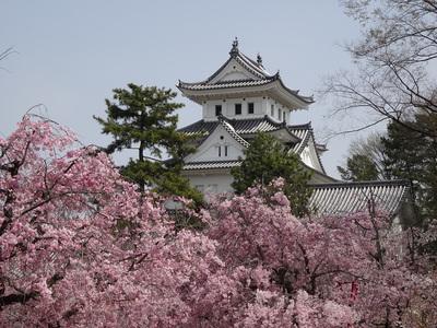 桜並木と天守