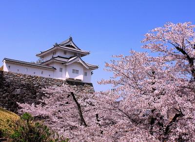 稲荷櫓と満開の桜