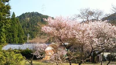 長徳寺の桜と雲林院城遠望