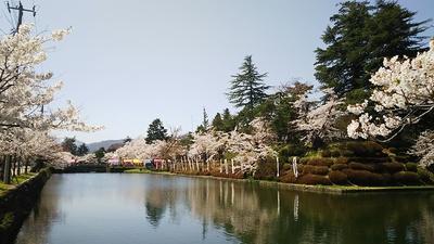 米沢の春到来