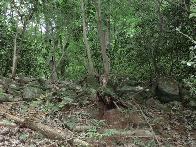 三田村屋敷跡の石垣